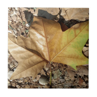 pebbles and leaves small square tile