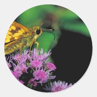 Peck s skipper on Mistflower Sticker