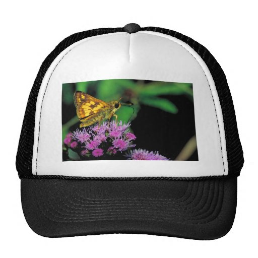 Peck's skipper on Mistflower Hat