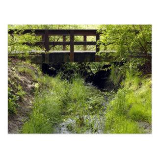 Pedestrian Bridge over a Creek Postcard