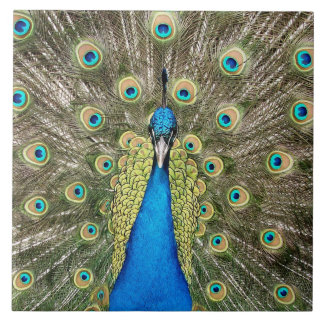 Pedro Peacock Feathers Colorful Bird Peafowl Tile