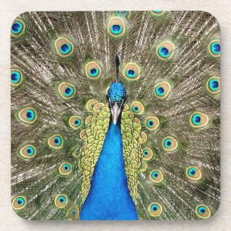 Pedro Peacock Feathers Colorful Wild Bird Peafowl Coaster