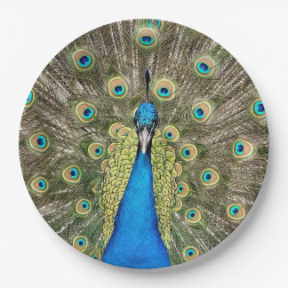 Pedro Peacock Feathers Colorful Wild Bird Peafowl Paper Plate