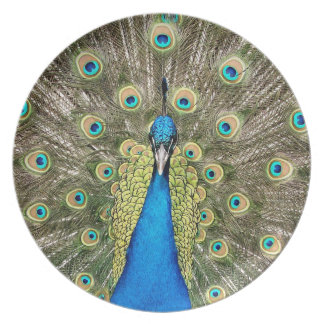 Pedro Peacock Feathers Colorful Wild Bird Peafowl Plate