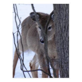 peek-a-boo deer. postcard
