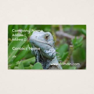 Peek-a-boo Iguana Business Card
