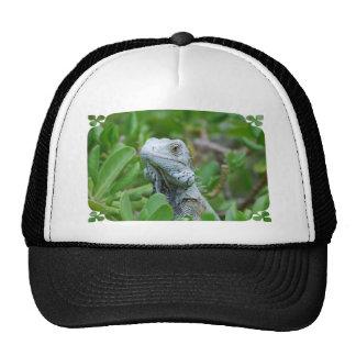 Peek-a-boo Iguana Cap