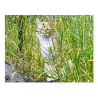 Peek-a-boo kitty postcard