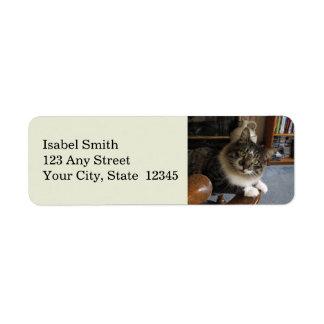 Peek-a-Boo Kitty Zorro Return Address Labels