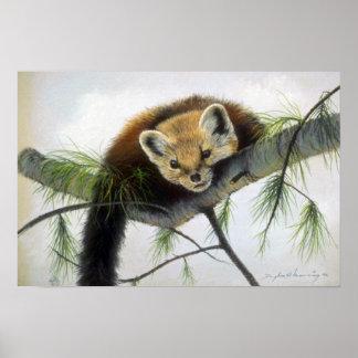 Peek-a-boo, Pine Marten Poster