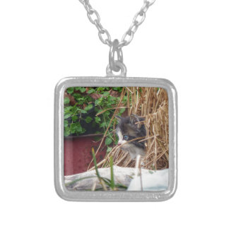 Peek-a-Boo Silver Plated Necklace