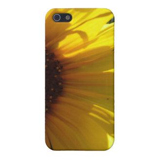 Peek-A-Boo Sunflower iPhone 5/5S Cover