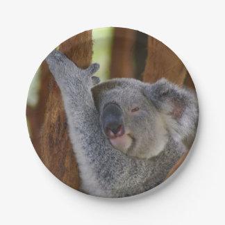 Peekaboo Koala Plate