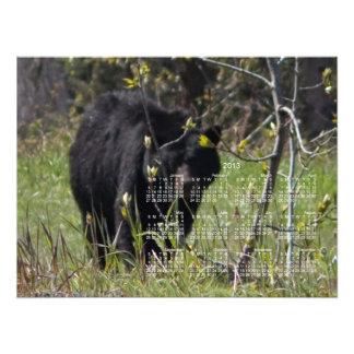 Peeking Bear 2013 Calendar Photo Art