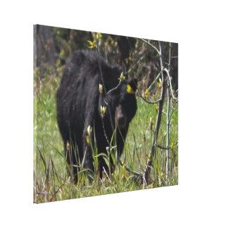 Peeking Bear Stretched Canvas Prints