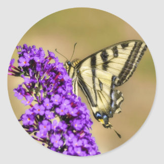 Peeking Butterfly Stickers