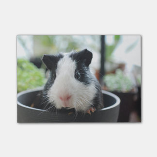 Peeking Guinea Pig Post-it Notes
