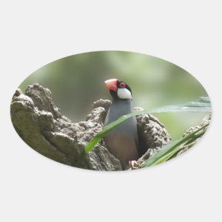 Peeking Java Sparrow Oval Sticker