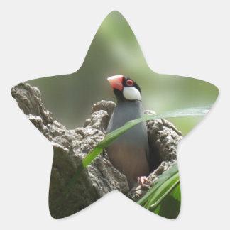 Peeking Java Sparrow Star Sticker