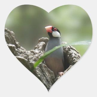 Peeking Java Sparrow Sticker