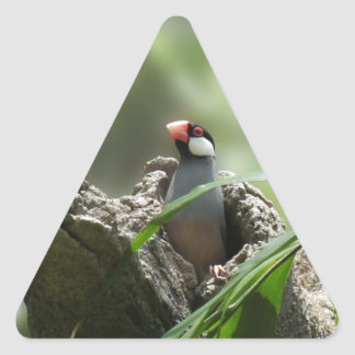 Peeking Java Sparrow Triangle Sticker