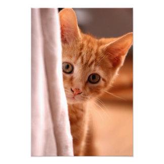 Peeking Kitten Photo Print
