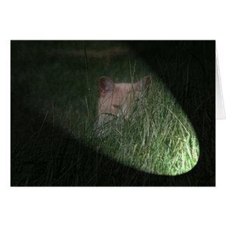 Peeping Tom Cat Greeting Card