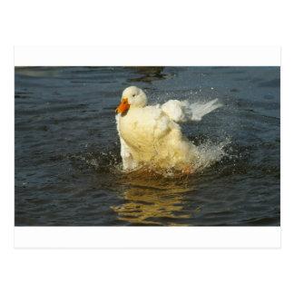 Pekin Duck VII Postcard