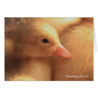 Pekin Ducklings Card