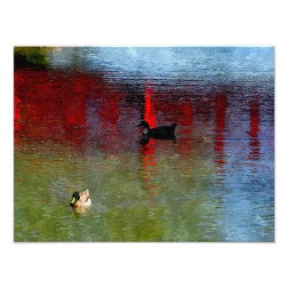 Peking Duck Photo Art