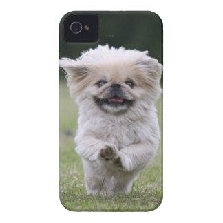 Pekingese dog blackberry bold case, cute photo iPhone 4 cover