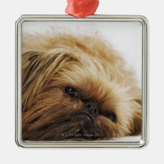 Pekingese dog, close up Silver-Colored square decoration