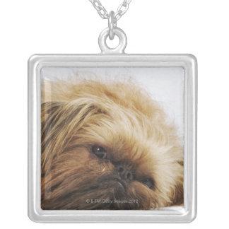 Pekingese dog, close up silver plated necklace