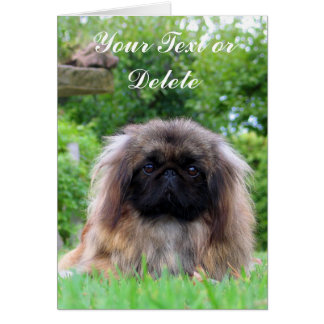 Pekingese dog custom greeting card