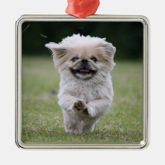 Pekingese dog ornament, cute photo, gift Silver-Colored square decoration