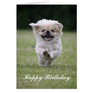 Pekingese dog running cute happy birthday card