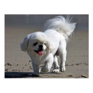 Pekingese Puppy Dog Blank Post Card