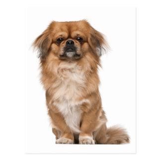 Pekingese Puppy Dog Post Card