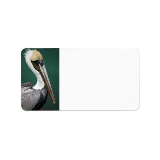 Pelican Address Label