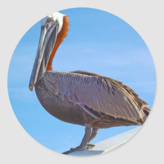 Pelican Again Classic Round Sticker