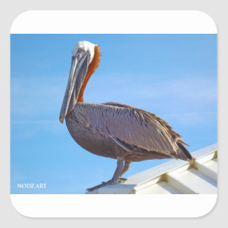Pelican Again Square Sticker
