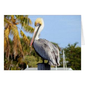 Pelican at Jug Creek Note Card