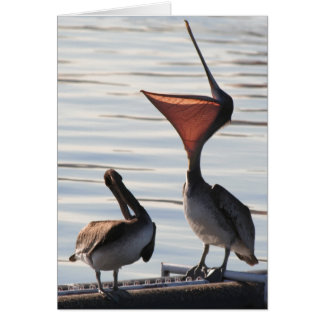 Pelican Birds Wildlife Animals Card