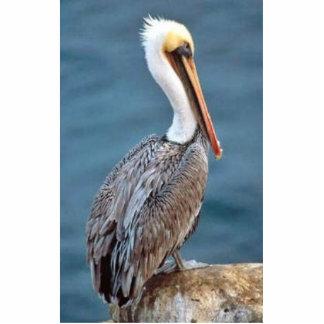 Pelican, brown (B02L) Cut Out
