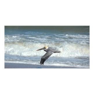 Pelican Flying over the ocean surf photocard Picture Card