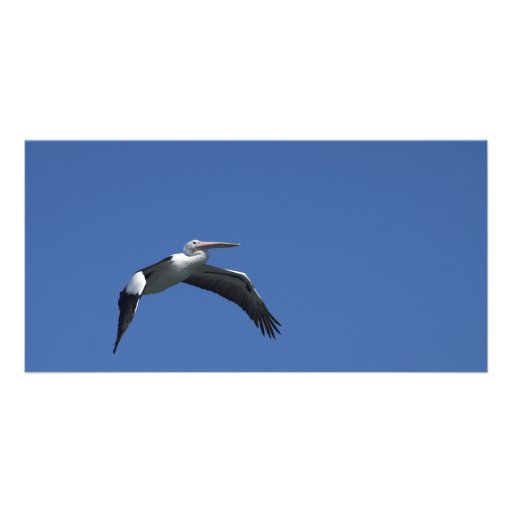 Pelican Flying Photo Card Template