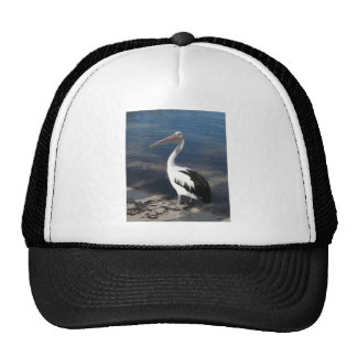 Pelican 'Hello there' Hat