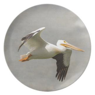 Pelican In Flight Plate