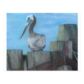 Pelican of Hatteras Ferry Postcard