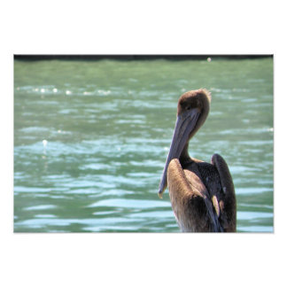 Pelican on a Post Art Photo
